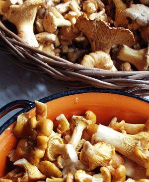 Kurki (lub inne grzyby) w śmietanie